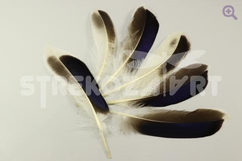 Перо утки 10-15см, цвет: натуральный