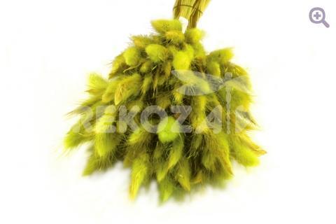 Лагурус, цвет: жёлто-зеленый 151