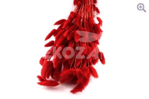 Лагурус, цвет: красный 260